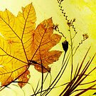 Autumn leaf and Grass by Roz McQuillan