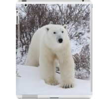Polar Bear Coming out of the Arctic Willow iPad Case/Skin