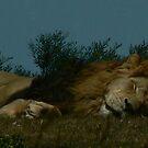Lazing Around by Karina  Cooper