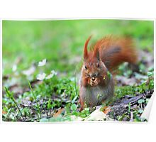 Spring Squirrel Photography Poster