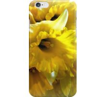 Spring Daffodils  iPhone Case/Skin