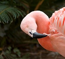 pink flamingo by studioepoch