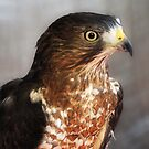 Hawk Eye by Jarede Schmetterer