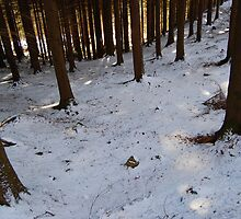 Deep into the forest by txema olmo