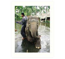water elephant Art Print