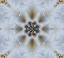Delicate Delight by Julie Shortridge