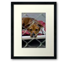 pit bull prison Framed Print