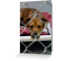 pit bull prison Greeting Card