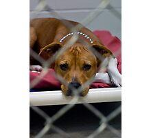 pit bull prison Photographic Print