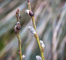 Rain pearls by LadyFi
