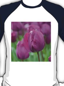 Purple Tulip with Water Drops T-Shirt