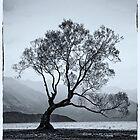 Lone tree Lake Wanaka by Karen Scrimes