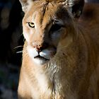Texas Cougar by Wade Simmonds