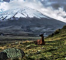The Andes by Bernai Velarde