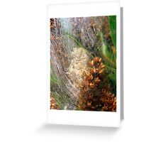 spider silk with eggs Greeting Card