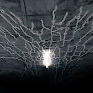 Cracked Ceiling by Alex Shiels