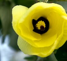 """I'm listening!"" ~ Hibiscus Tiliaceus Yellow Bloom  by Kerryn Madsen-Pietsch"