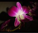 Other Orchid  by KazM