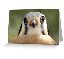 American Kestrel ~ Say Cheese? Greeting Card