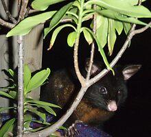 Hello, Possum! by Arkani