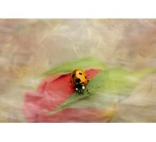Wispy and whimsical Photographic Print