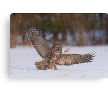Great Gray Hunter Canvas Print