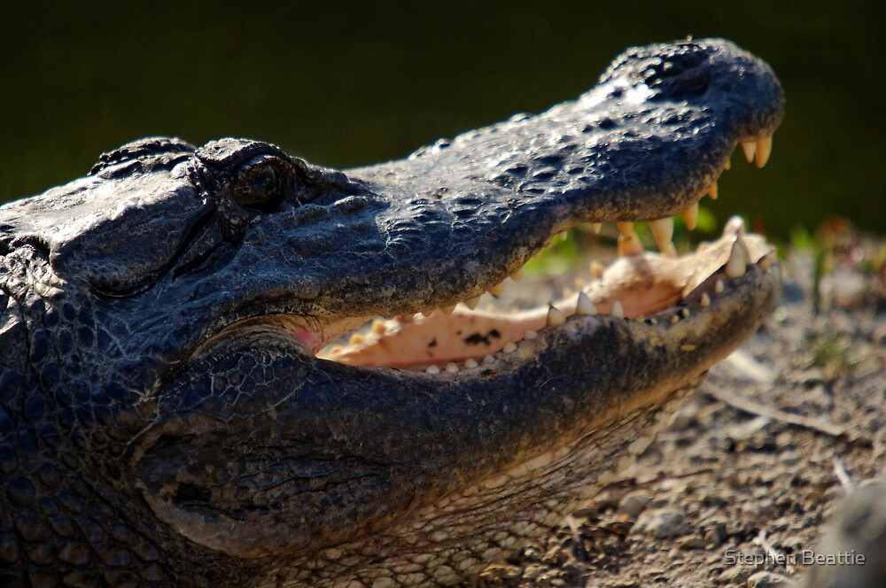 Toothy Grin by Stephen Beattie