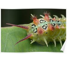 Cup Moth Caterpillar Poster