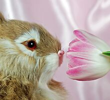Hoppy Spring by Maria Dryfhout