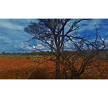 Dry Outback Photographic Print