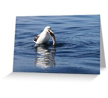 Caught! Greeting Card