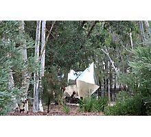Peace and Quiet - Sculpture Garden, Australian National Gallery Photographic Print