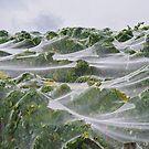 Vineyard waves. by Victor Pugatschew