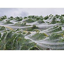 Vineyard waves. Photographic Print