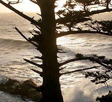 Cape Arago cliff, Oregon by Matt Emrich