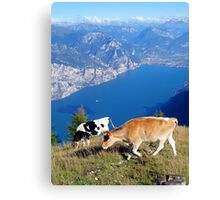 High Altitude Grazing, Monte Baldo / Lake Garda, Italy Canvas Print