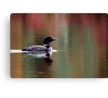 Fall Loon - Common Loon Canvas Print