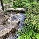 Creek at Araluen by Chris  Willis