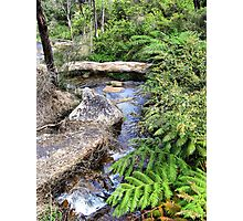 Creek at Araluen Photographic Print