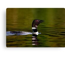 Call of a Loon Canvas Print