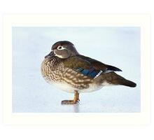 My favourite duck - Wood Duck Art Print