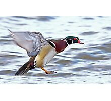 Flight of the Wood Duck Photographic Print