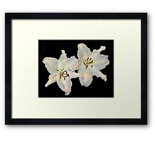 White Lilies Duo Framed Print