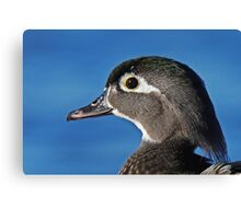 The beauty of the female wood duck Canvas Print