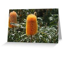 Banksia Greeting Card