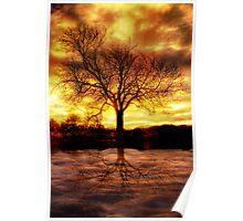 Druid Tree Poster