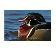 Quack! - Wood Duck Art Print