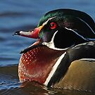 Quack! - Wood Duck by Jim Cumming