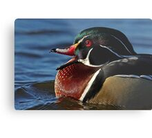 Quack! - Wood Duck Metal Print