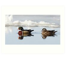 Wood Ducks on river Art Print